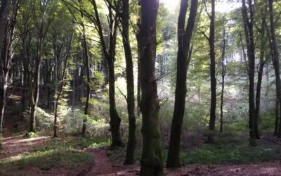 The beech trees wood of Cimini Mountains is World Heritage Site of UNESCO