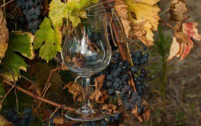Corso di avvicinamento al vino in dimora storica